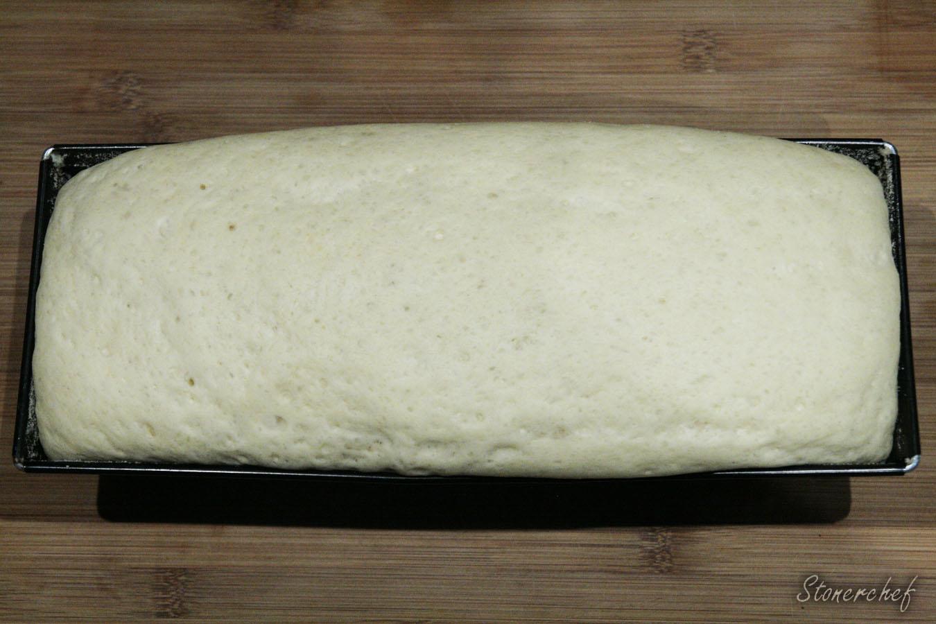 wyrośnięte ciasto na chleb tostowy