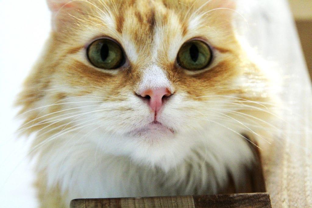 koty i ludzie