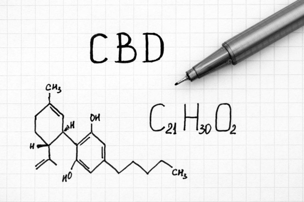 CBD układ endokannabinoidowy
