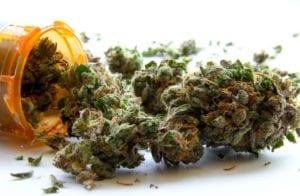czym różni się medyczna marihuana od rekreacyjnej