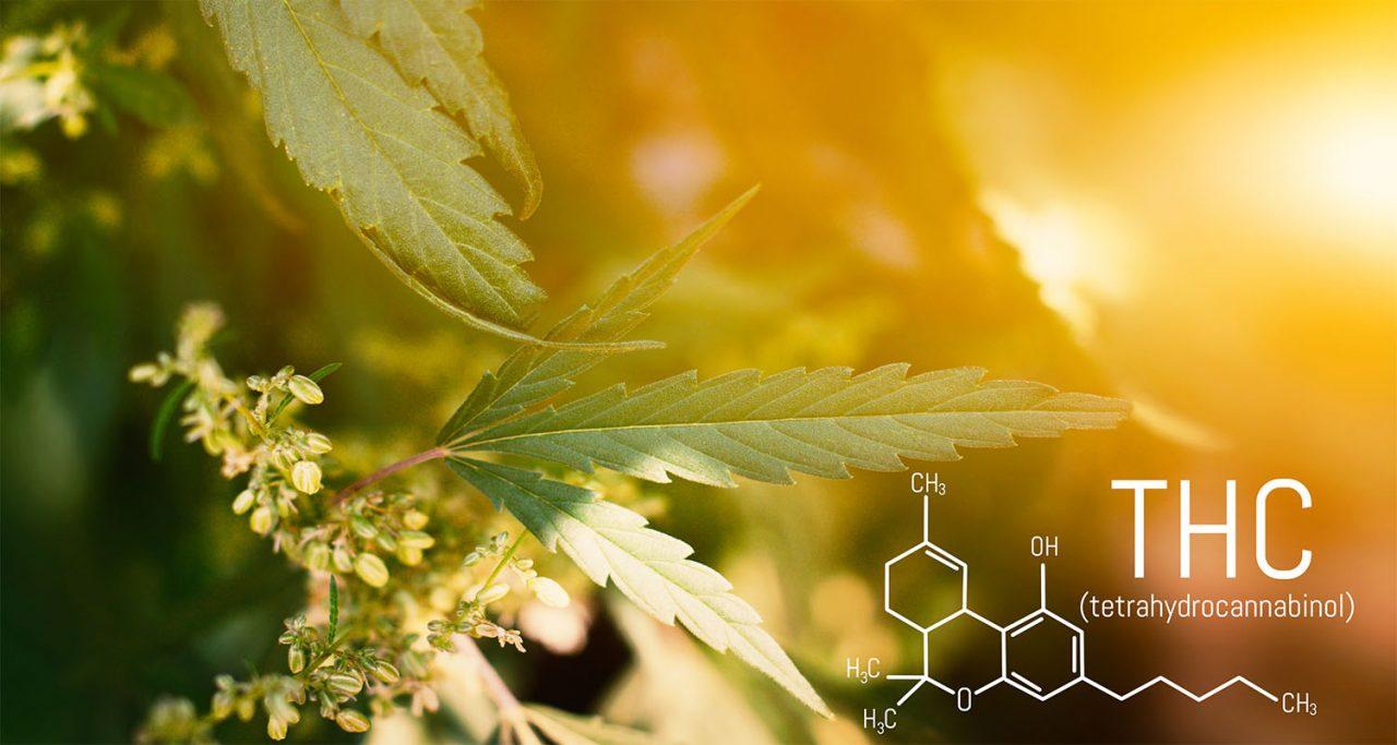 jak marihuana wpływa na mózg