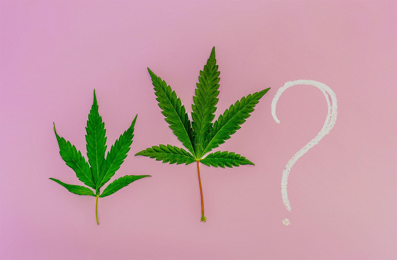 medyczna marihuana najczęściej zadawane pytania
